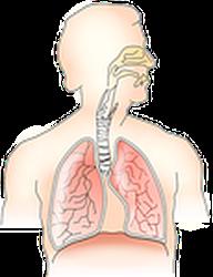 Pranayama arbeitet mit dem Atemapparat, um darüber hinaus den gesamten Körper und Geist zu stärken.