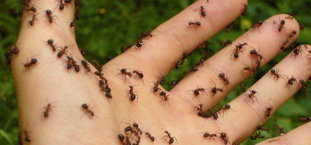 Ameisen bekämpfen: Natürliche Hausmittel für Garten und Wohnung ...
