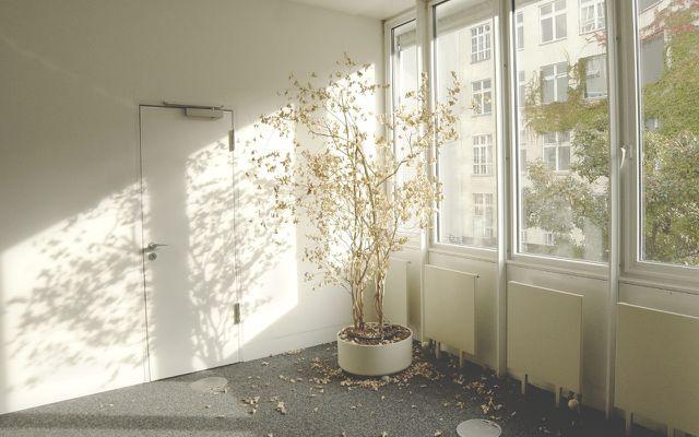 Zimmerpflanze verliert Blätter