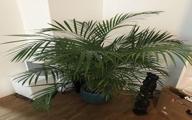 non toxic houseplants