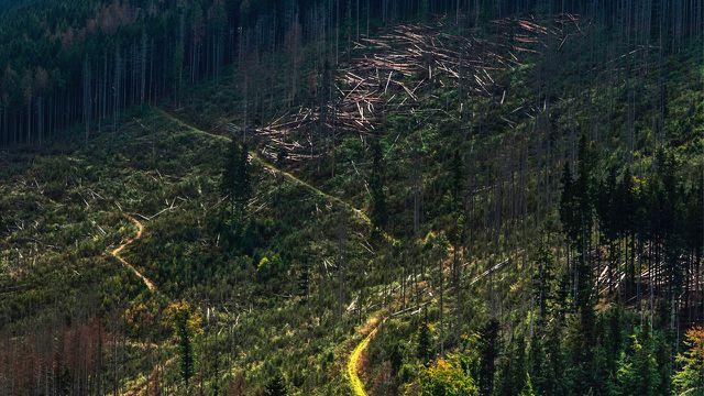 Bäume pflanzen, Wald, Rodung