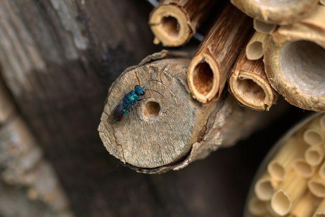 Ein sonniger und warmer Standort eignet sich perfekt für dein Insektenhotel.