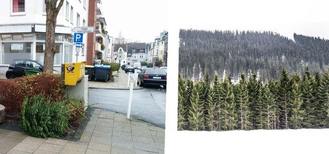 Tannenbaum Wegwerfen.Weihnachtsbaum Entsorgen Sammelstelle Biomüll Oder Verwertung
