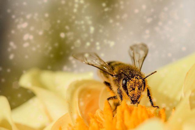 Bienenfreundliche Sträucher und Pflanzen bieten viele Pollen und viel Nektar.