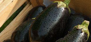 how to freeze eggplant