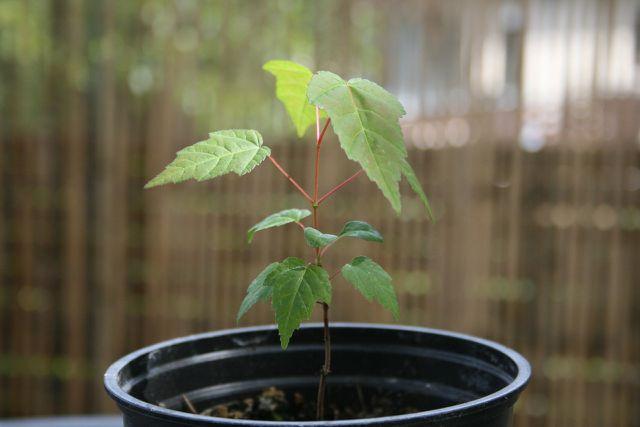 Ein Baum zum Mitwachsen