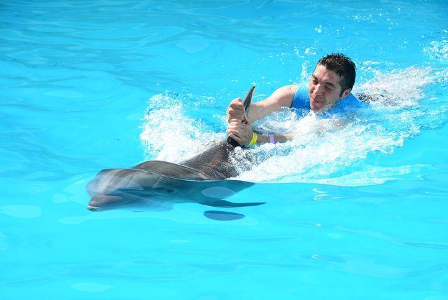 Auch wenn die Tümmler scheinbar immer zu lächeln scheinen: In Delfinarien leiden die Tiere unter den künstlichen Lebensbedingungen.