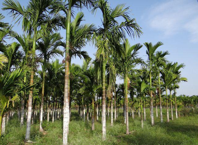 Auf der abgeholzten Regenwaldfläche entstehen Plantagen.