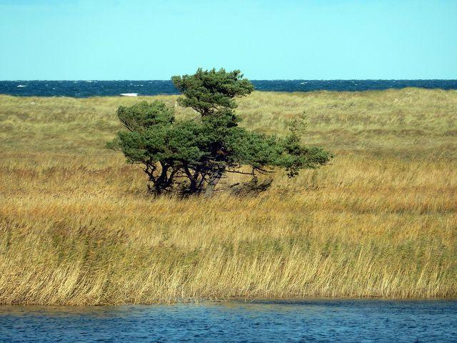 Küstengebiete sind nur ein Beispiel, wo ganz bestimmte Arten leben