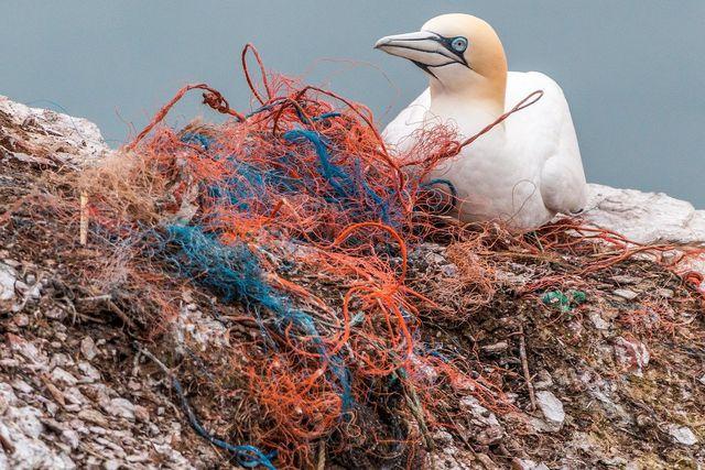 Plastik im Meer ist für viele Tiere problematisch.