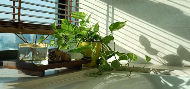 Pflanzen fürs Badezimmer: Diese eignen sich besonders gut ...