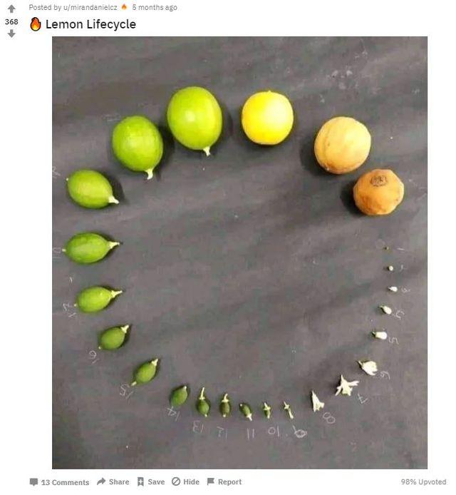 Lebenszyklus, Pflanze, Obst, Twitter, Reddit