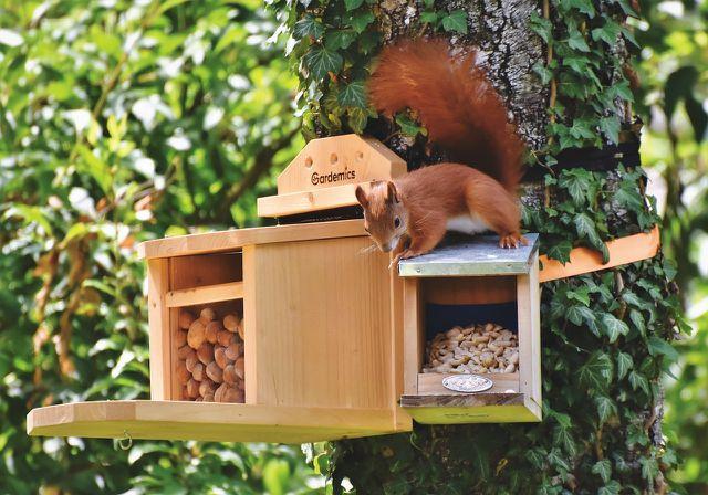 Eichhörnchenfutter kannst du in speziellen Futterstellen bereitstellen.