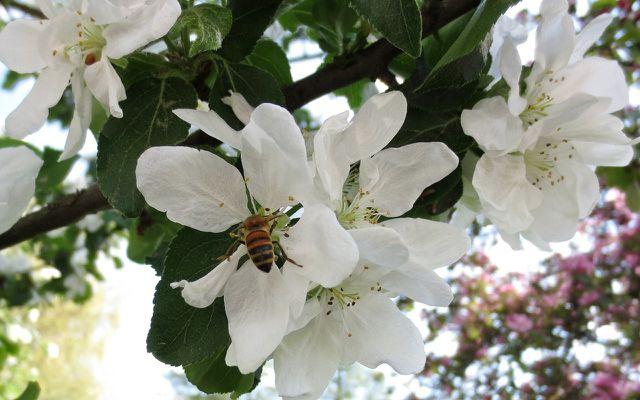 Bienenfreundliche Pflanzen Die Besten Ideen Fur Garten Und Balkon