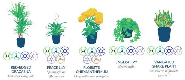 Raumluft Verbessern Pflanzen Mit Luftreinigender Wirkung Utopia De