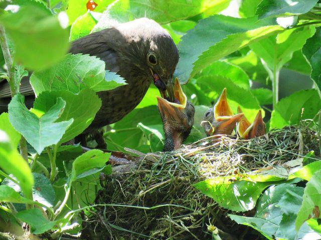 Achte bei der Gartenpflege unbedingt auf nistende Vögel.