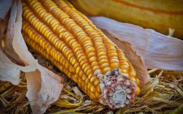 Mais enthält neben Kalorien auch noch viele weitere Mineralstoffe und Vitamine.