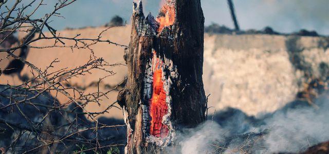 Waldbrände in USA und Amazonas: Negative Bilanz in der CO2-Kompensation