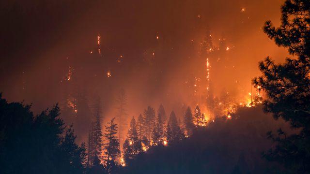 Klimaflüchtling Klimakrise Waldbrände