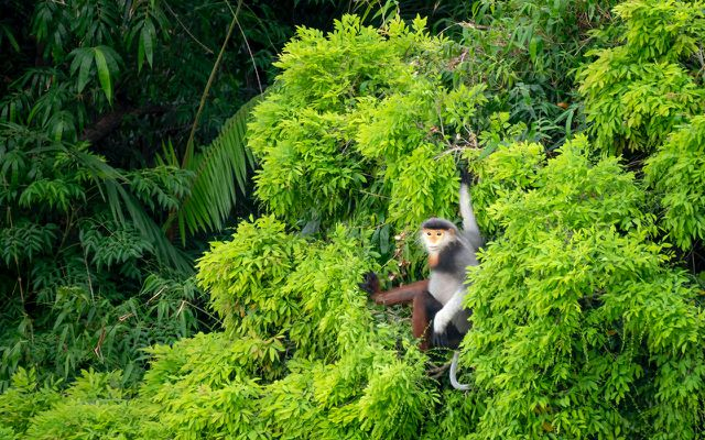 ecosystem tropical rainforest