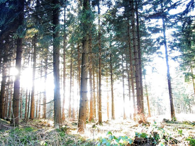 Aktivurlaub: Wandern im Naturreservat Šumava
