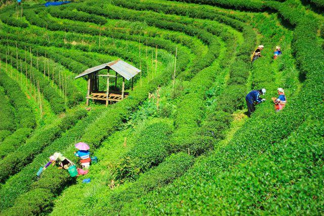 Der faire Handel kann die Lage der Keinbauern verbessern.