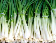how to keep green onions fresh