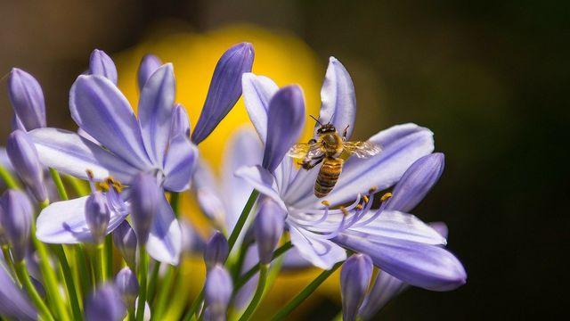 Die Honig-Sorte bestimmt nicht, ob der Honig roh ist – sondern die Verarbeitung.