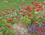 Wertet jeden Garten auf: ein Dahlienbeet.