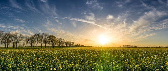 Rapshonig aus Bio-Landwirtschaft ist seltener mit Pestiziden belastet.