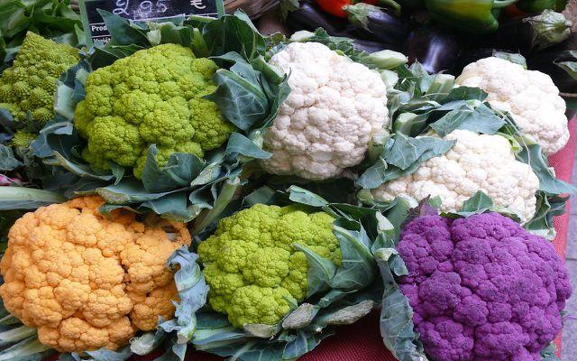 cabbage variety