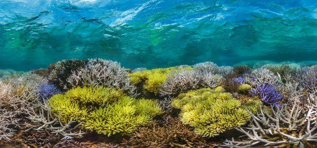 Chasing Coral auf Netflix