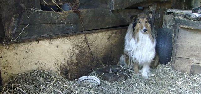 eBay Kleinanzeigen Hunde Welpen Haustiere