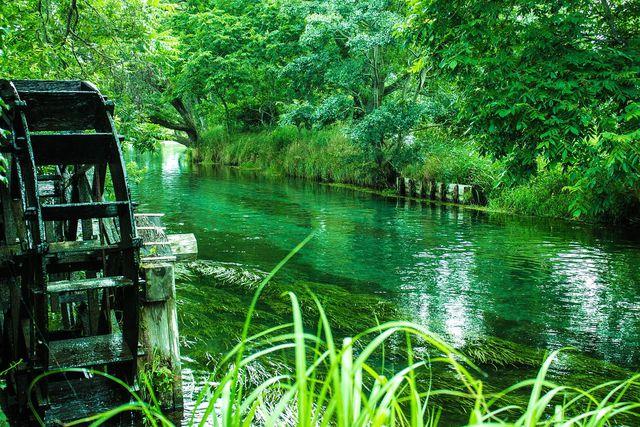 In Japan wächst Wasabi vor allem an Flussufern. Aber auch bei uns kannst du Wasabi pflanzen – im Topf.
