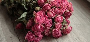 preserving roses