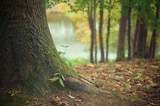 Blei kann als Bleistaub in die Natur kommen.
