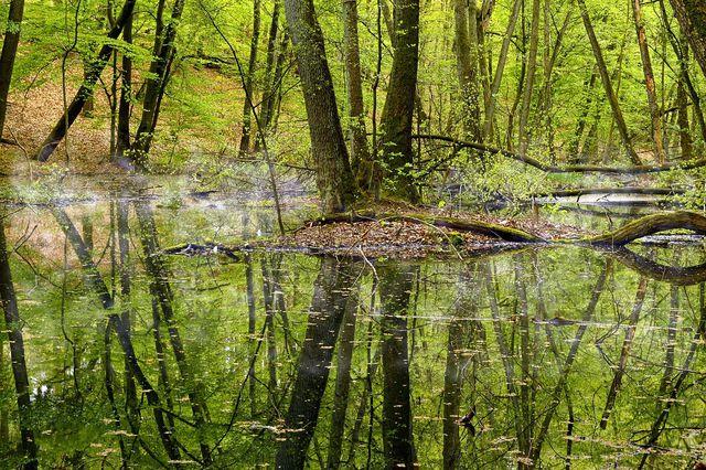 Mit der FFH-Richtlinie sollen naturnahe Lebensräume wiederhergestellt oder erhalten werden.