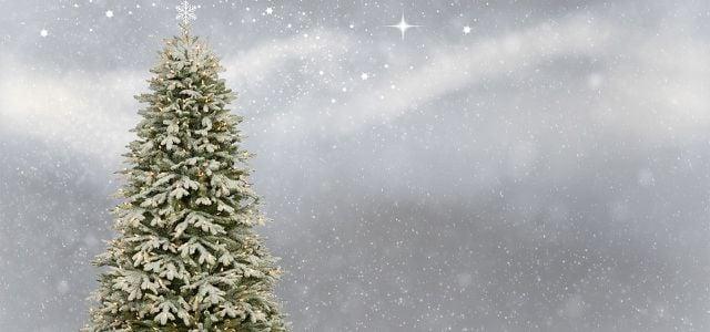 Tannenbaum Selber Schlagen.Weihnachtsbaum Selber Schlagen Ist Das Nachhaltiger