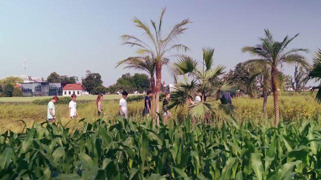 """Im Film """"Anders Essen"""" sehen die Familien Ölpflanzen für Palmöl auf ihrem Feld."""