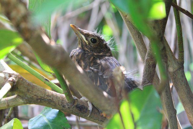 Mit einem Mix aus einheimischen Sträuchern wird die Artenvielfalt gefördert.