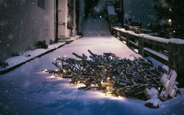 Weihnachtsbäume-Alternativen