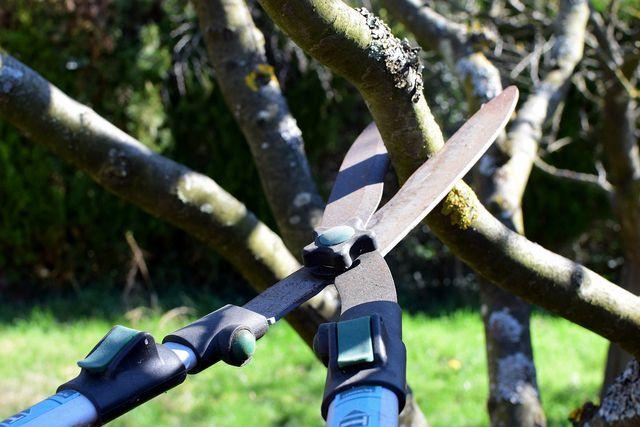 Es ist relativ einfach, eine manuelle Heckenschere zu schärfen.