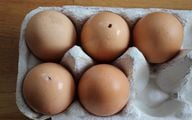 Ausgeblasene Eier trocknen