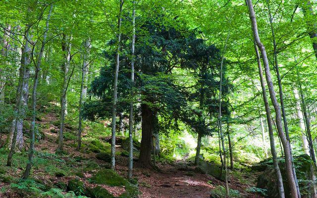 urlaub mal anders 10 sehenswerte urwälder in europa