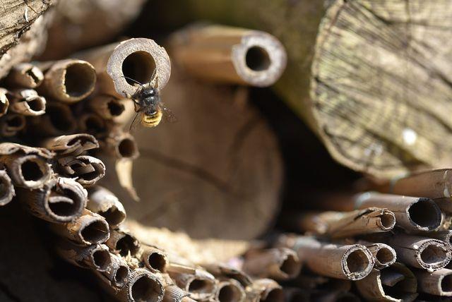 Wildbienen ziehen sich gerne in Pflanzenstängel zurück. Allerdings sollten diese vertikal und nicht horizontal stehen.