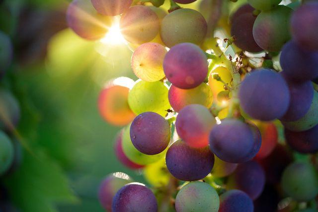 Fruchtsäurepeelings enthalten Glykolsäure, die z.B. aus jungen Trauben gewonnen wird.