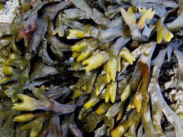 Innovative Fasern aus Algen