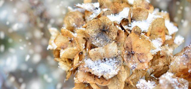 winterharte kübelpflanzen