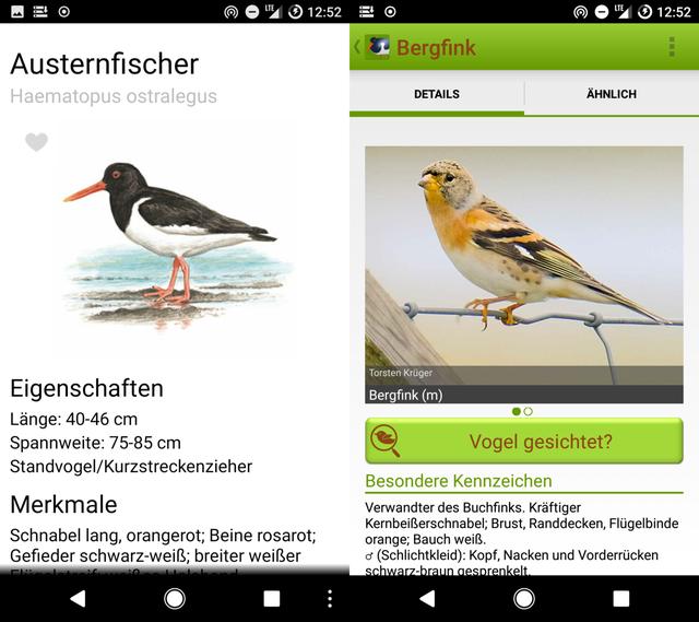 Vögel mit Smartphone-Apps erkennen.