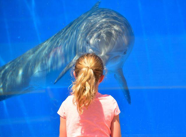 Delfintherapien sind wissenschaftlich nicht fundiert, sondern können laut Forscher*innen eher eine Gefahr darstellen.